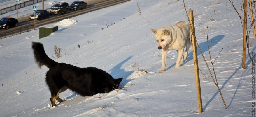 Фотоподборка: Как собаки ловят мышей на набережной Ижевского пруда