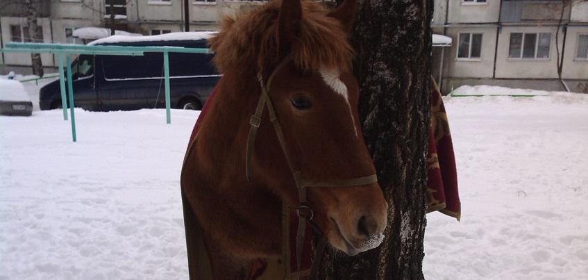 В Ижевске неизвестный оставил во дворе дома лошадь