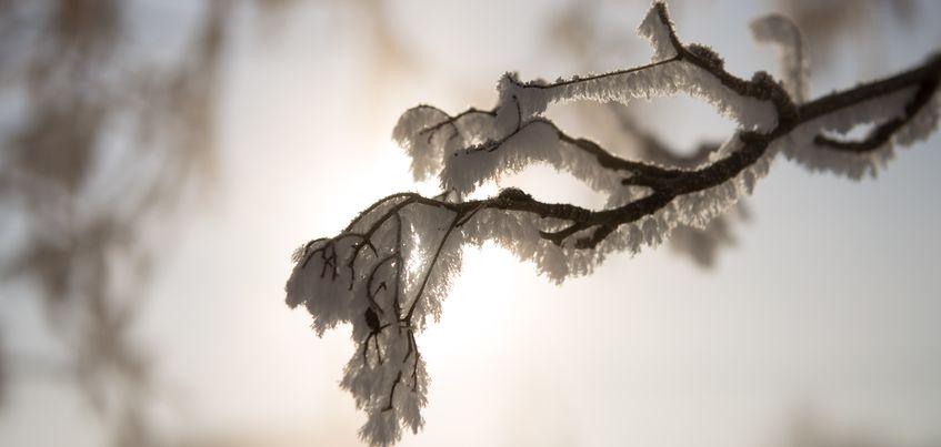 Неделя в Ижевске будет морозной