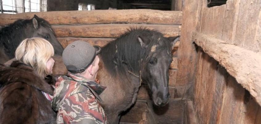 Жители Удмуртии выбрали имя для лошадки Никаса Сафронова, которая живет в «Лудорвае»