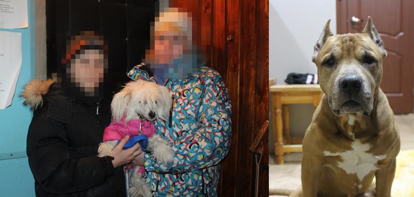В Ижевске питбуль напал на 11-летнего мальчика и его собаку