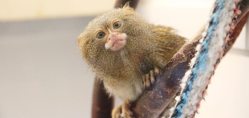 Цена билета в зоопарк Удмуртии повысится с 1 февраля