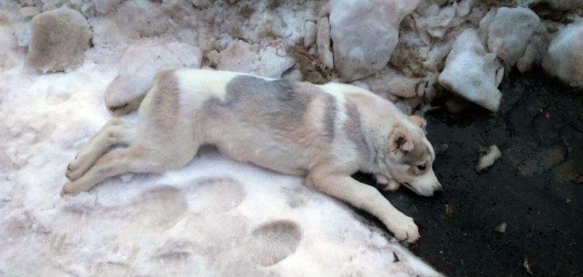 Ижевчанин спас двухмесячную собаку, которая выпала из окна пятого этажа