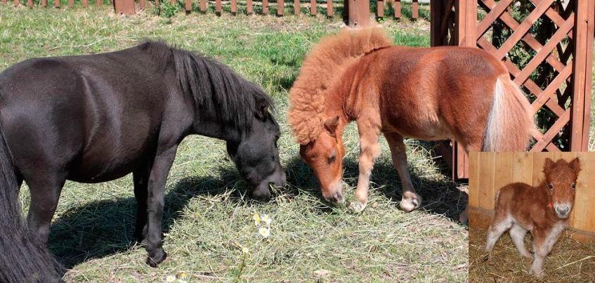 В зоопарке Удмуртии выбрали имя мини-лошадке