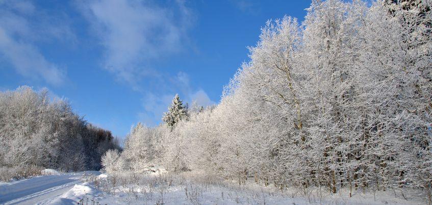 На неделе в Ижевске ожидается теплая и бесснежная погода