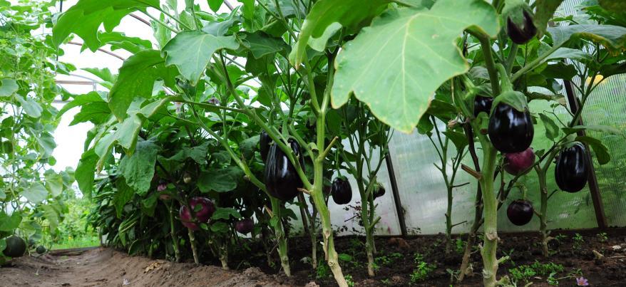 Как ижевчанам выбрать качественные семена и получить хороший урожай