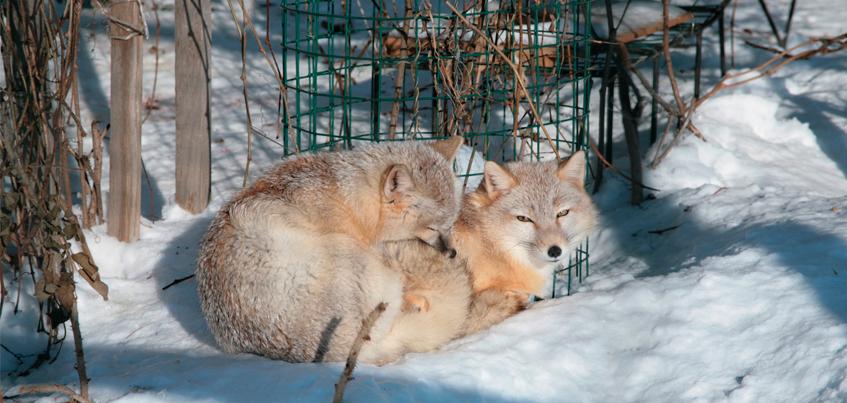 7 животных из зоопарка Удмуртии, у которых можно поучиться любви