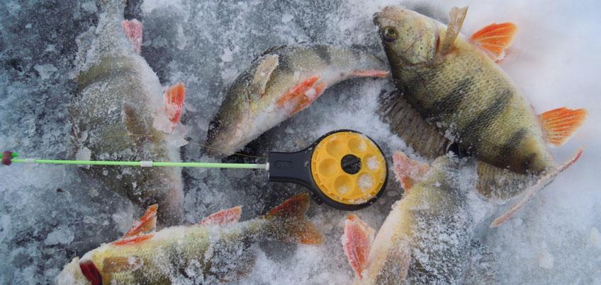 Рыбацкие байки: ижевчанин поймал 2-килограммовую щуку на мормышку