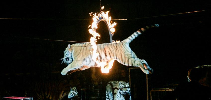 Цирковой фестиваль в Ижевске: канатоходец в огненном кольце и танцы «Бурановских бабушек» с морскими львами