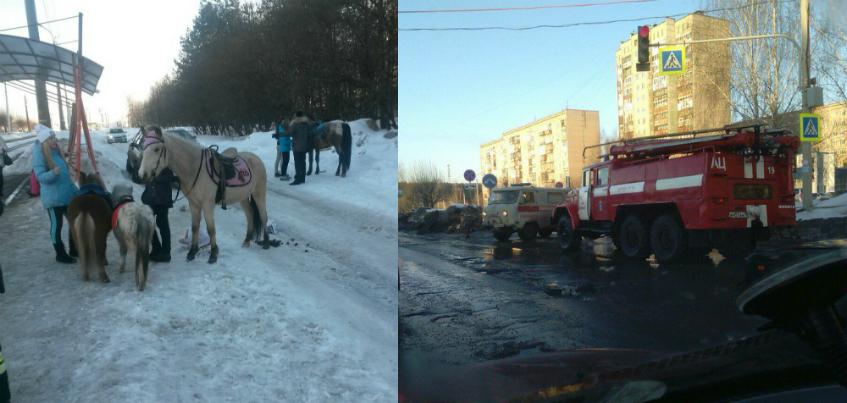 В Ижевске лошадка «напала» на автомобиль Нексия