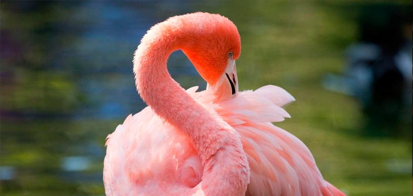В зоопарке Ижевска появятся фламинго и белые яки