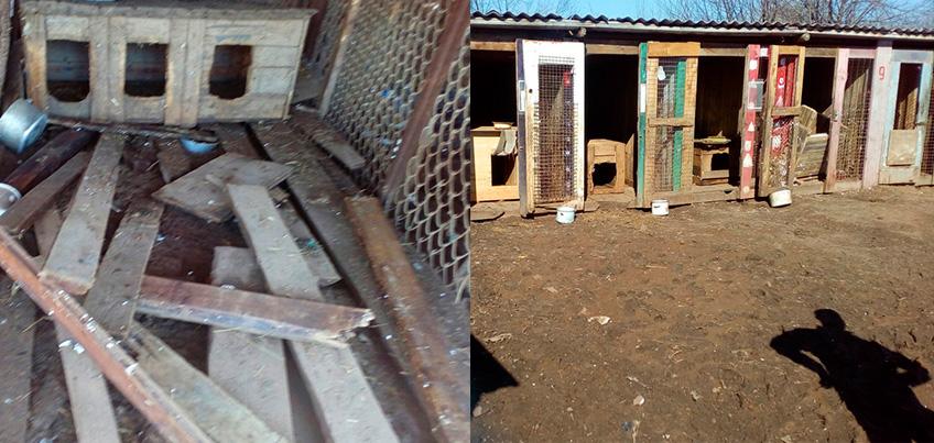 В Удмуртии полностью разрушился приют, из которого с началом паводка спасали собак