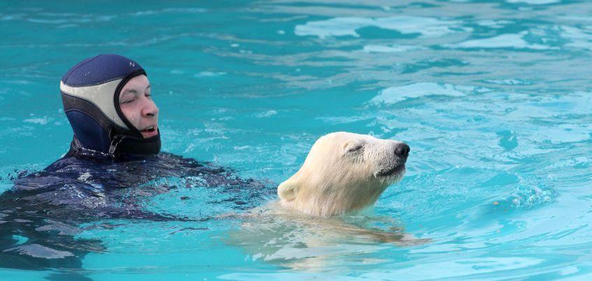 Фото: Белых медвежат-близняшек из зоопарка Ижевска учат плавать
