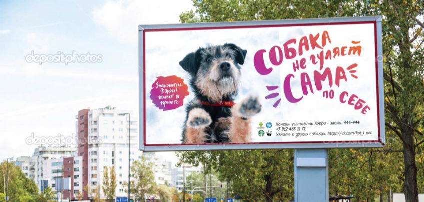 Три билборда и 10 скамеек с изображением бездомных собак появится в Ижевске