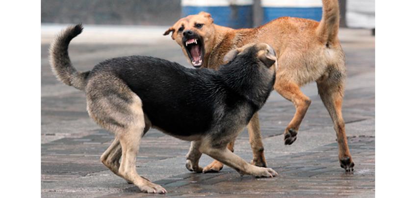 Куда ижевчане могут подать заявку на отлов безнадзорных животных