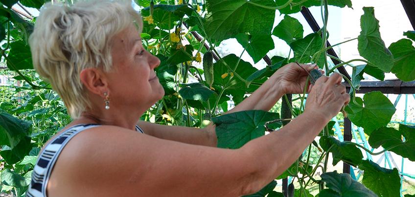 Лунный календарь садовода на лето-2016: какие работы провести на даче, чтобы ижевчанам получить хороший урожай