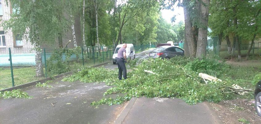В Ижевске из-за сильного ветра повалило несколько деревьев