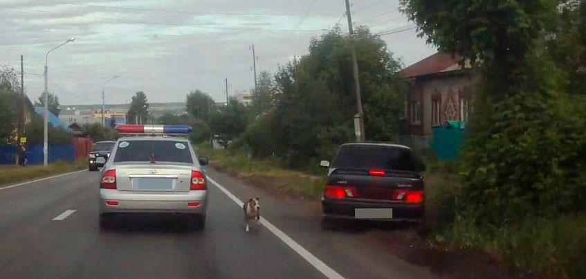 В Ижевске водитель «пятнадцатой», рискуя собственной безопасностью, объехал выбежавшую на дорогу собаку