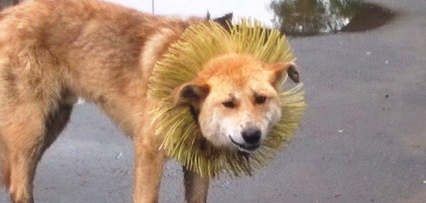 В Ижевске неизвестные надели щетку на шею бродячему псу