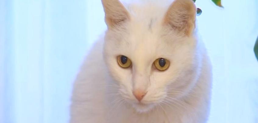 Ижевскому коту с удмуртским именем исполнилось 100 лет