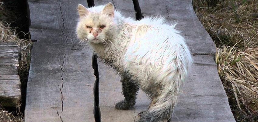 В Ижевске работники одного из предприятий жалуются на жестокое убийство кошек