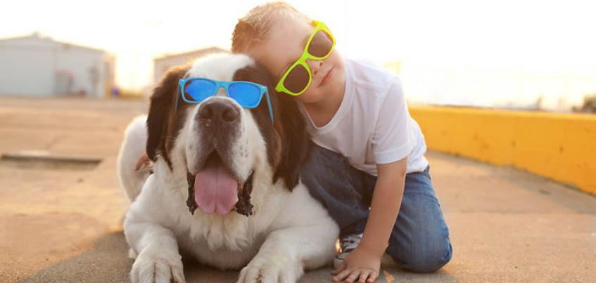 Пришлите фото забавных выходок ваших животных и выиграйте сертификат в зоомагазин