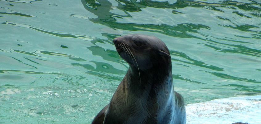 В ижевском зоопарке родились морские котики