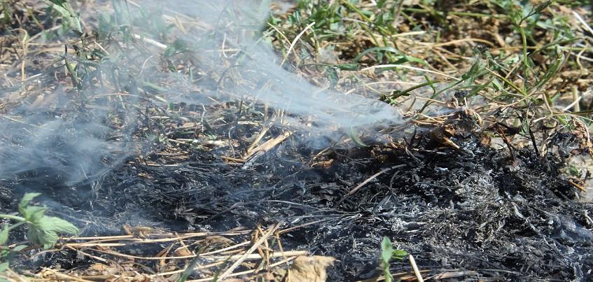 В лесах Удмуртии объявлен 4 класс пожароопасности