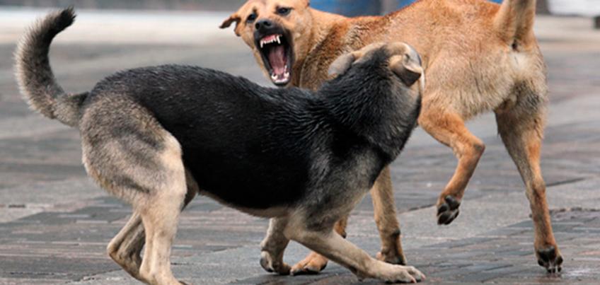 Ижевчане могут подать заявку на отлов безнадзорных агрессивных животных