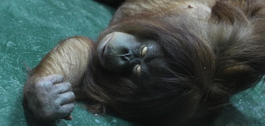 Видео: Ижевский зоопарк показал, как живут животные ночью