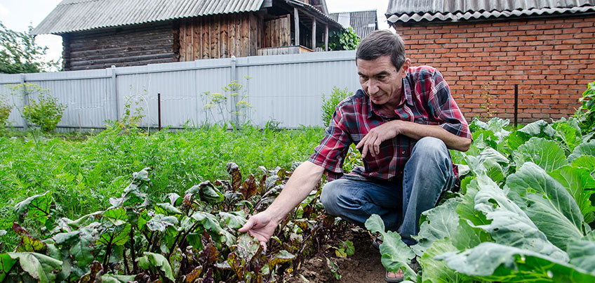Проверяем бабушкины советы: насколько полезны и безопасны растворы от сорняков