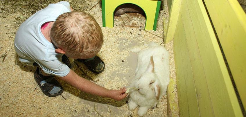 Дети из рубрики «Нужна помощь» пообщались с животными из контактного зоопарка