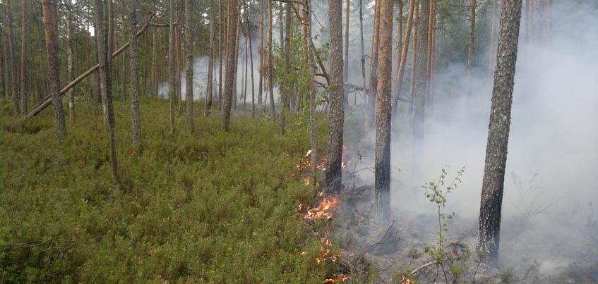 В Удмуртии до 1 сентября действует особый противопожарный режим