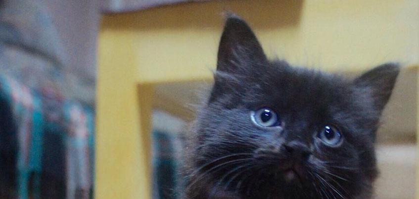 Биатлонистка из Удмуртии Анастасия Кайшева ищет дом маленькому котенку