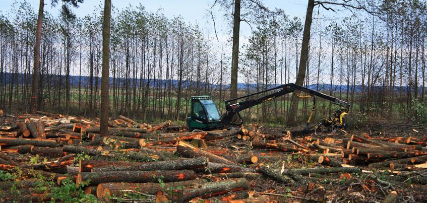 В Удмуртии уменьшилось количество случаев незаконной вырубки лесов