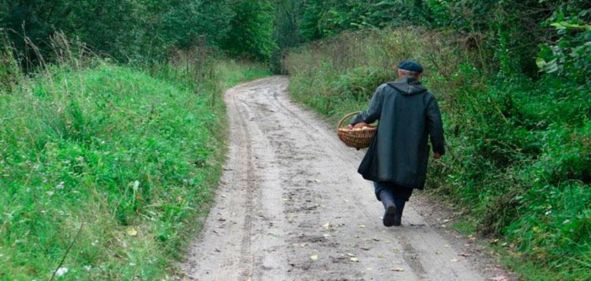 Грибной сезон: как уберечь своих пожилых родственников от гибели в лесу