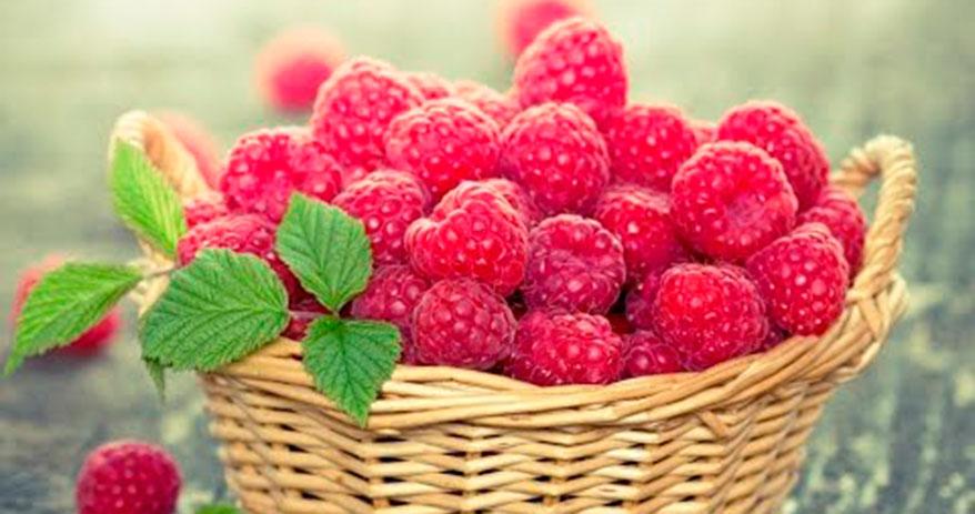Чудо-ягода: садоводы Удмуртии получают урожай ягод с ремонтантной малины до самой осени