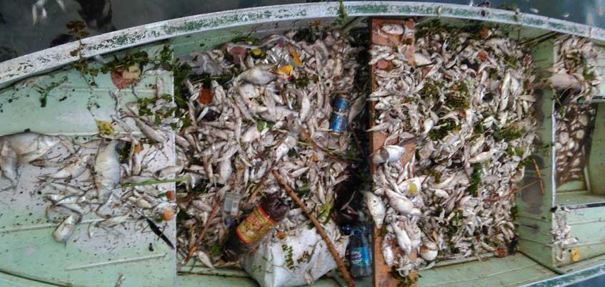 За день из Воткинского пруда в Удмуртии достали 600 кг мертвой рыбы