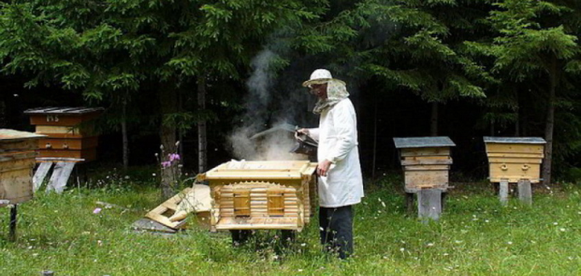 Из-за многочисленных укусов в Удмуртии вступили в силу новые правила содержания медоносных пчел