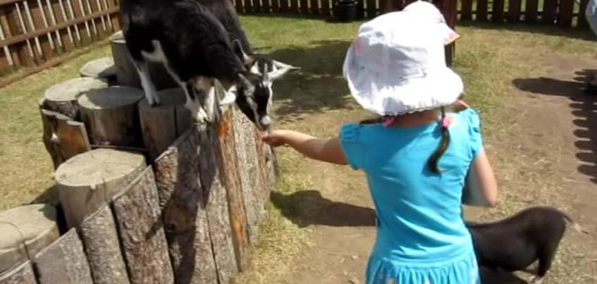 Ижевскому зоопарку исполняется 8 лет
