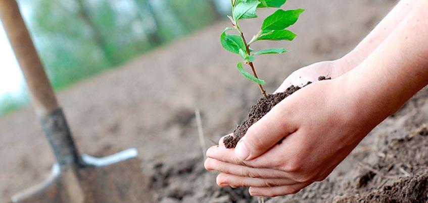 Жители Удмуртии могут посадить дерево «онлайн» в рамках акции «Посади лес»
