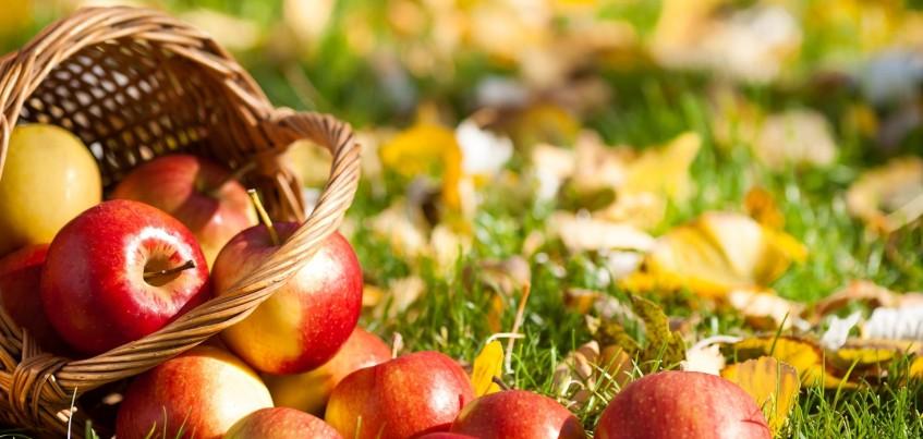 Как ижевчанам подготовить яблоки на зиму?