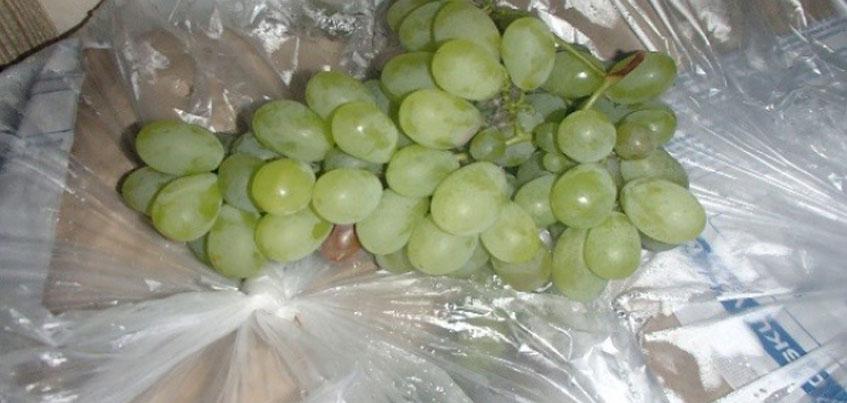 Больше тонны белого винограда раздавили трактором в Ижевске