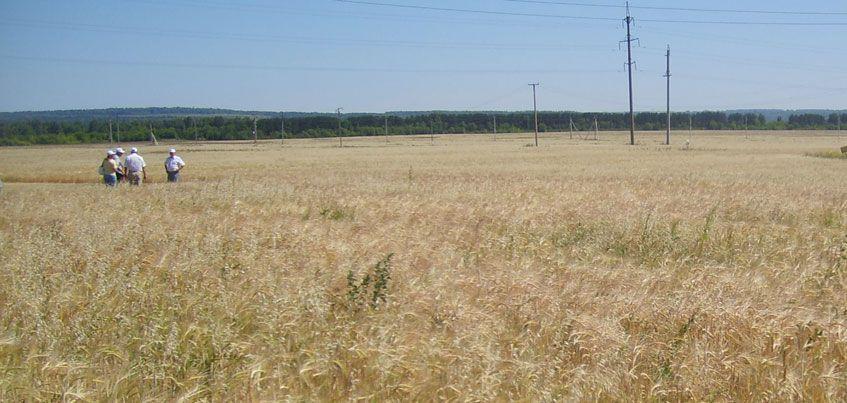 В Удмуртии вводят режим ЧС из-за засухи