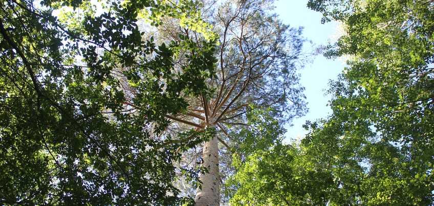 Запрет на разведение костров в лесах Удмуртии продлен до середины сентября