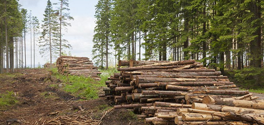 За полгода в Удмуртии незаконно вырубили лес на 2 млн рублей