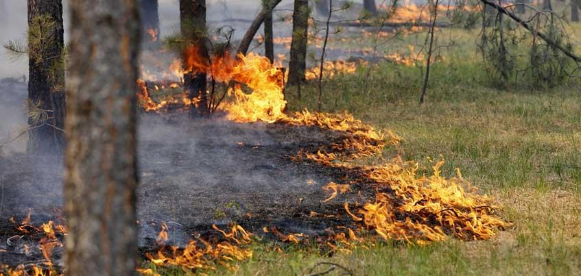 В лесах Удмуртии объявлена 5 категория пожароопасности