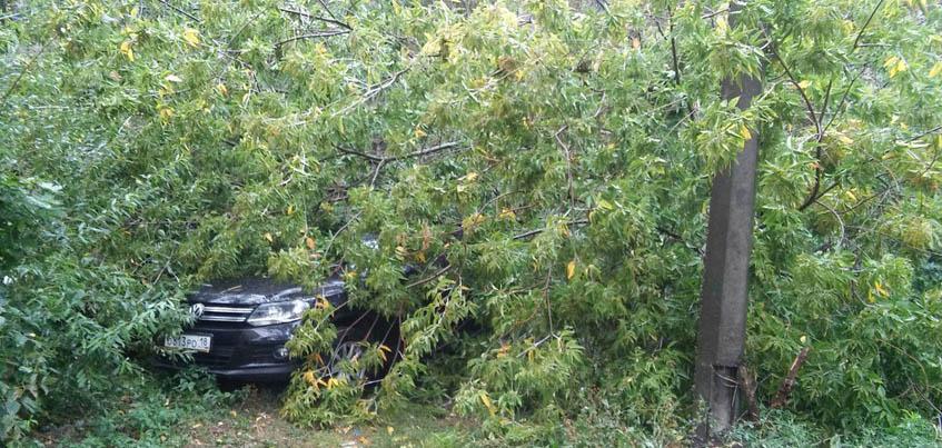Из-за сильного ветра в Ижевске сломанные деревья упали на тротуары и машины