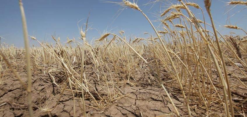 Засуха нанесла Удмуртии ущерб в 826 миллионов рублей