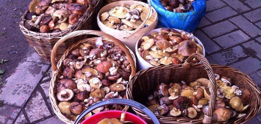 Жители Удмуртии за 2 часа собрали 12 корзин грибов